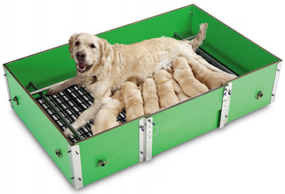 Paridera perros